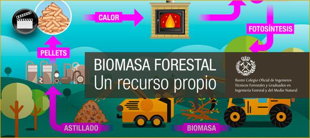 Biomasa forestal